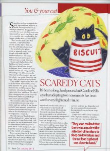 Your Cat Scaredy cats 1
